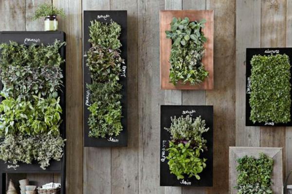 épice-jardin-vertical