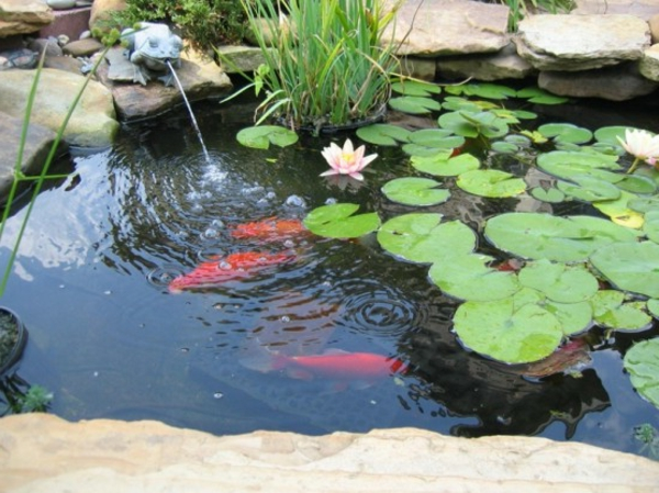 27 id s pour le bassin de jardin pr form hors sol for Best fish for small outdoor pond