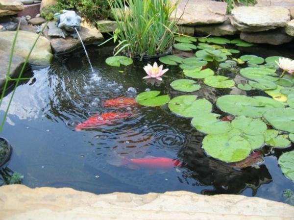 Bassin de jardin pour poisson rouge bassin de jardin for Nourriture poisson rouge de bassin