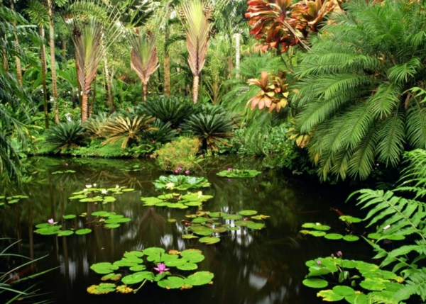 Bassin-de-jardin-Tropical-nénuphares