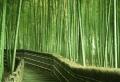 La palissade bambou japonaise – confortable et pratique