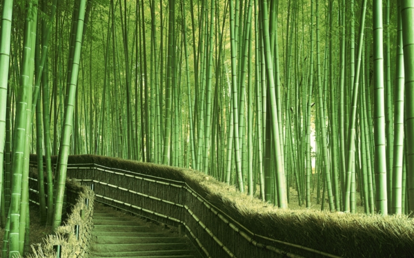 ???? (Bamboo Along Staircase, Saga, Kyoto Prefecture, Japan)