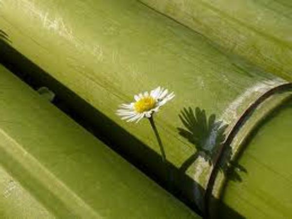 bambou-naturele-pour-palissade