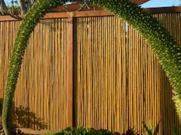 idée-pailisade-bamboo-de-jardin-unique