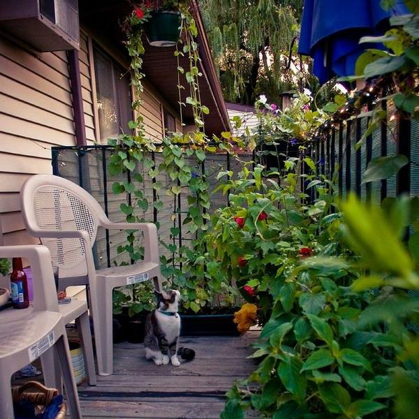 organisation-petit-balcon-avec-verdure-chaises
