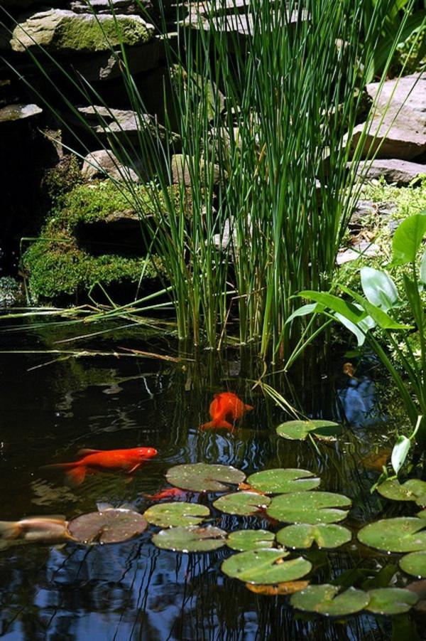 27 id s pour le bassin de jardin pr form hors sol for Poisson rouge en bassin exterieur