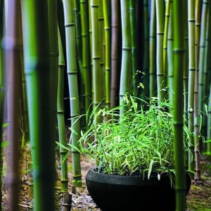 Modèles du jardin japonais , rien n'est plus exotique!