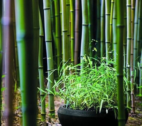 bambou-original-jardin-japonais