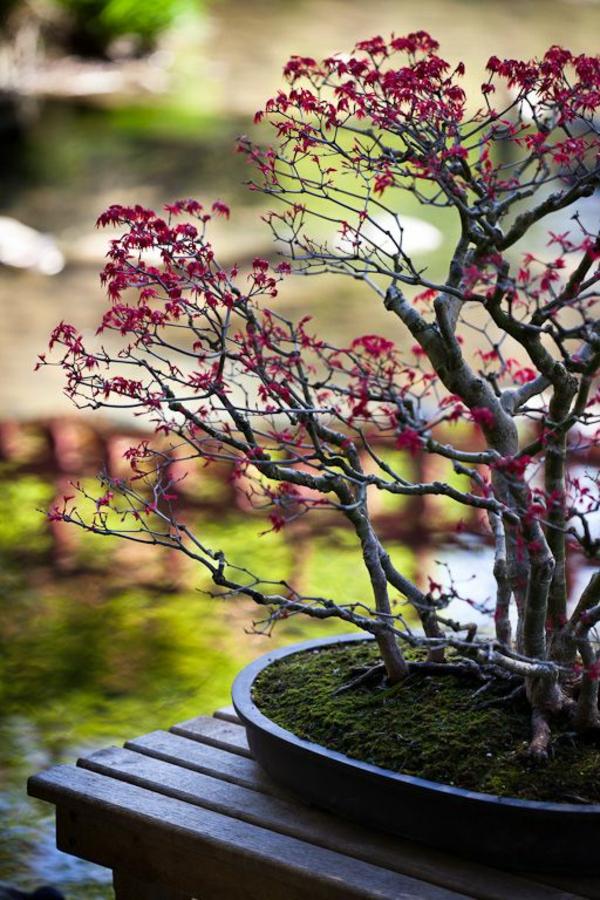 bonsai-arbre-jardin-japonais