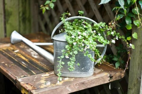 jardin-éléments-potde-fleur