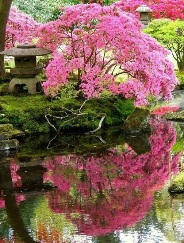 jardin-japonais-rose-