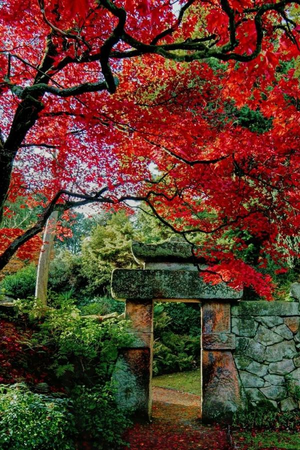 mur-de-piere-arbre-rouge