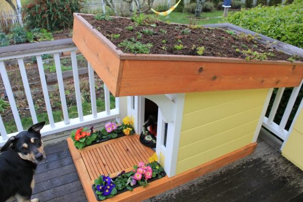 niche-pour-chiens-jqrdin sur-le-toit