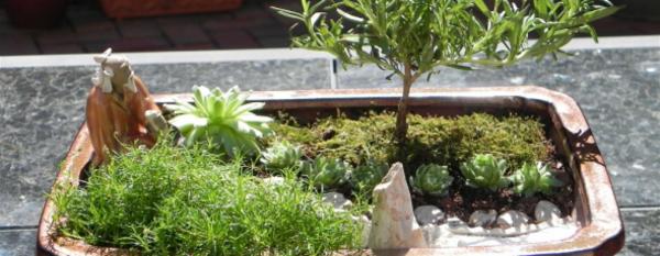 arbre-miniscule-jardin-zen-miniature
