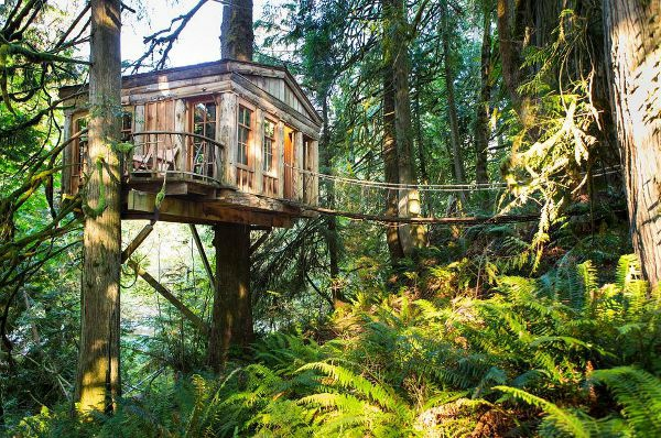 boic-cliar-design-cabane-dans-les-arbres