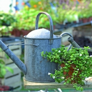 Idées de décoration de jardin pas cher
