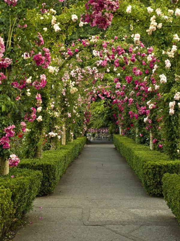 92596-allee-de-jardin-bordee-de-buis-et-surplombee-darches-fleuries-resized