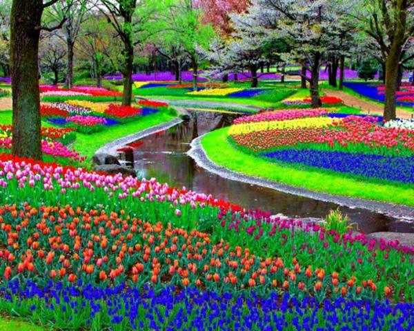 Jardin d\'été - décorations de plantes et fleurs remarquables ...
