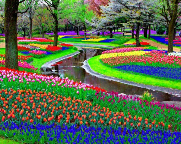 Keukenhof-Pays-Bas-Decouverte-Grand-Jardin-Fleurs-Monde-Hollande-
