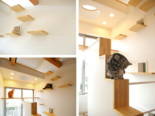 Pour le chat domestique elle a aussi besoin de logement for Maison chat design