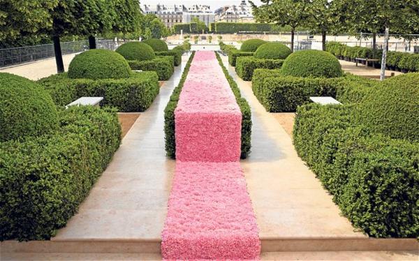 chemin-rose-