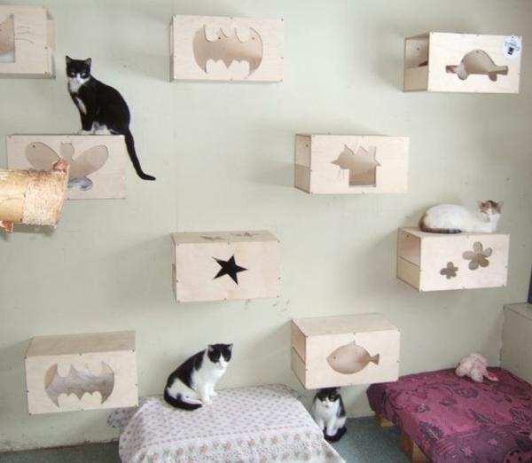 construction-pour-la-maisonèdes-chat-décoration-de-la-chambre
