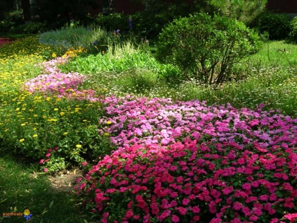 fleur-a-planter-