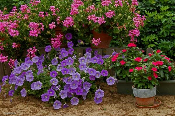 harmonie-florale-plante-à-fleurs