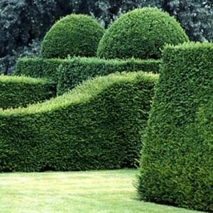 Le jardin de buis - l'incontournable dans l'art de jardinage!