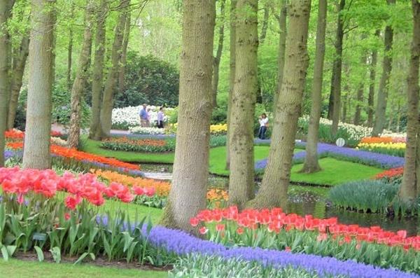 jardin-enchanteurs-planter-des-fleurs