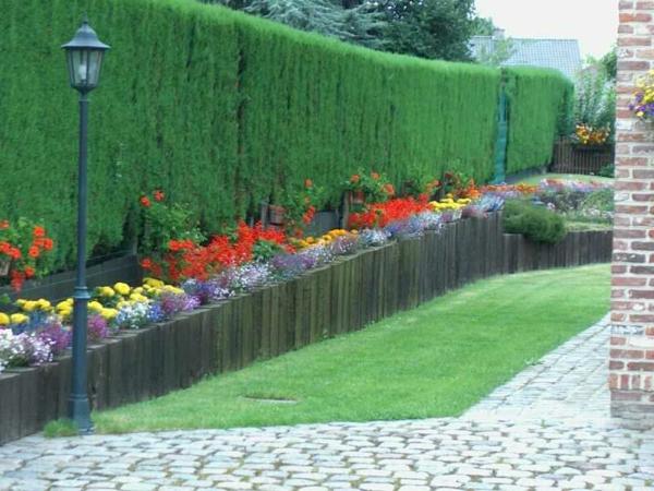Jardin d 39 t d corations de plantes et fleurs for Plantes decoration jardin