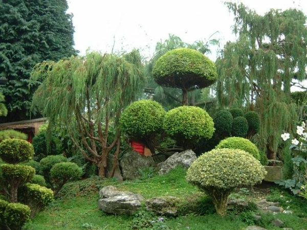 Des plantes originales pour le jardin zen - Quelles plantes pour jardin japonais ...
