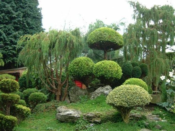 jolie-plantes-originales-