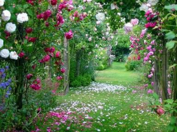plante-fleurie-
