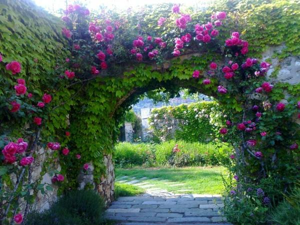 Jardin d 39 t d corations de plantes et fleurs remarquables - Encyclopedie des fleurs et plantes de jardin ...