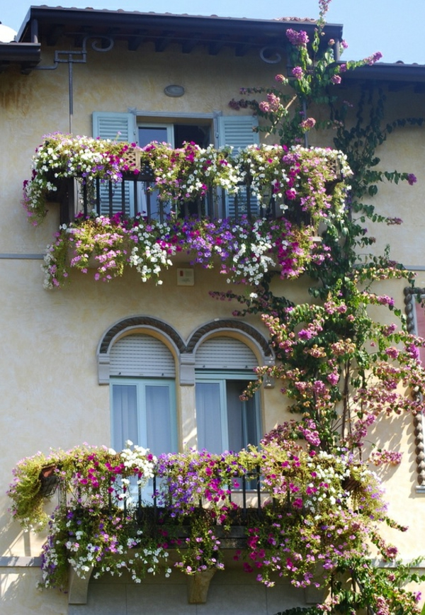 Des plantes grimpantes pour balcon et terrasse on est for Plantes grimpantes exterieur