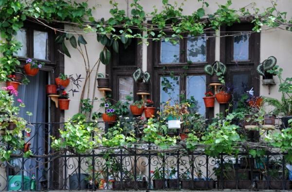 Des plantes grimpantes pour balcon et terrasse on est for Plante pot terrasse