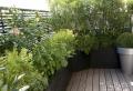 Des plantes grimpantes pour balcon et terrasse – on est toujours dans le jardin!