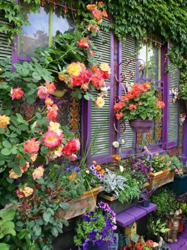 plantes-grimpantes-fenetre-violette-resized
