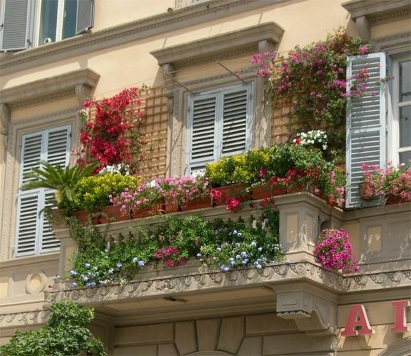 Des plantes grimpantes pour balcon et terrasse on est toujours dans le jard - Quelle plante pour balcon plein sud ...