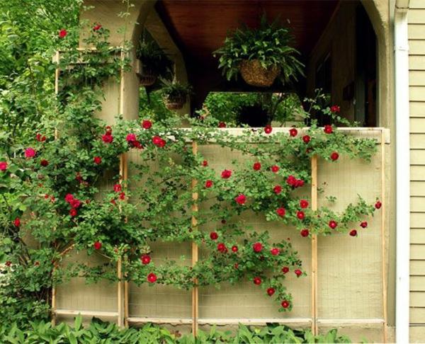 plantes-grimpantes-trelis-pour-roses-resized