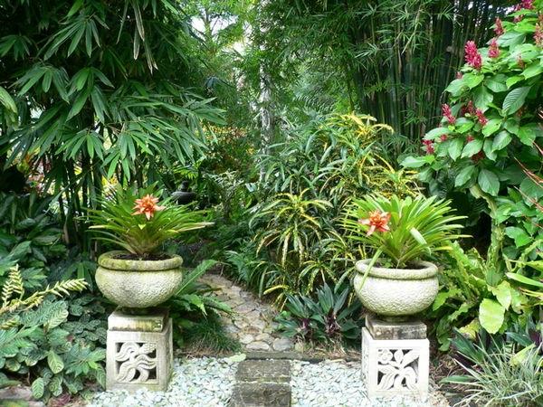 plantes-originales-et-fleurs