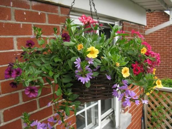Choisir une plante pour jardini re quelques id es et - Jardiniere exterieure ...