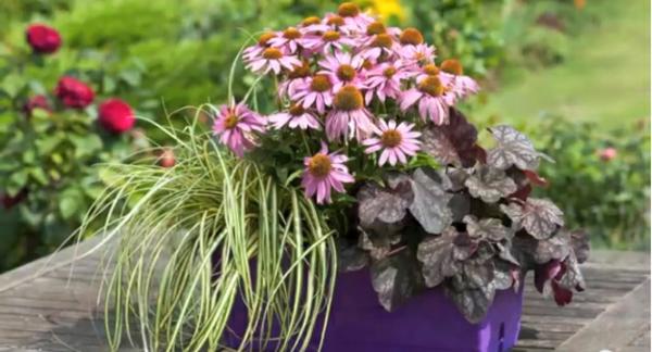 On espère que vous avez bien aimé nos propositions pour plantes pour ...