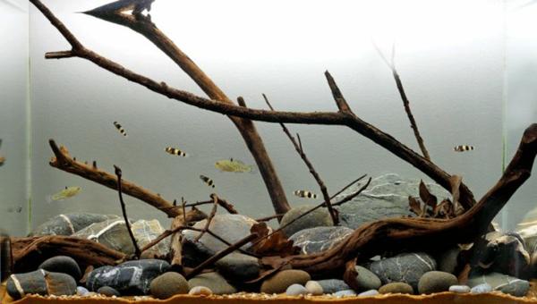aquarium-design-branches
