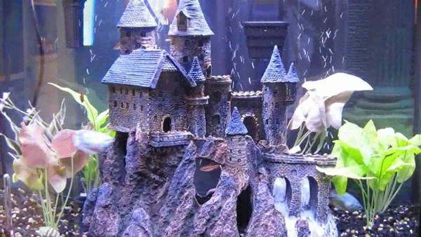 aquarium-design-chateau
