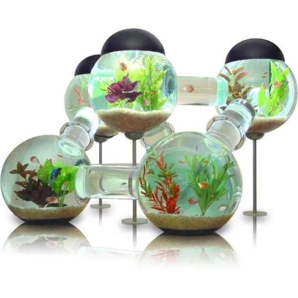 aquarium-design-interessante