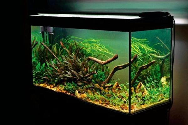 aquarium-design-simple-beau-0eclairage