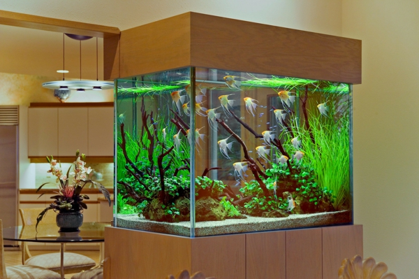 un aquarium design pas cher quelques id es en photos. Black Bedroom Furniture Sets. Home Design Ideas