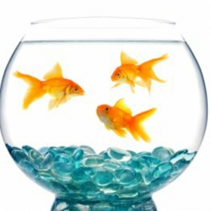 Un aquarium design pas cher - quelques idées en photos